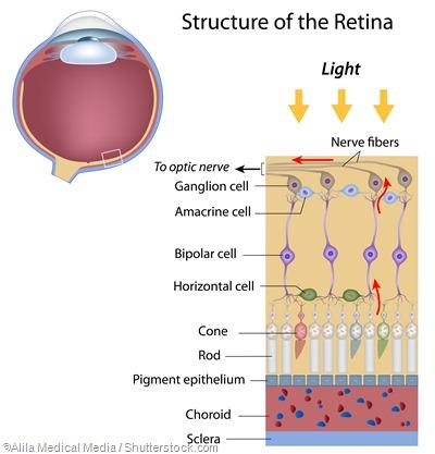 coni retinici e ganglio dei coni