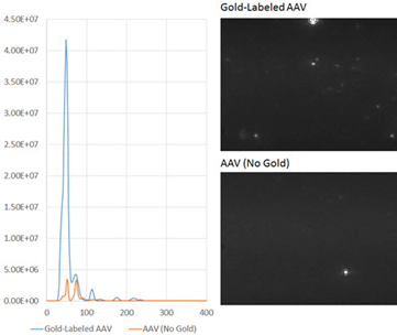 Gold-labeled AAV NTA results