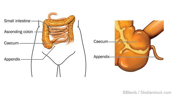 labelled appendix