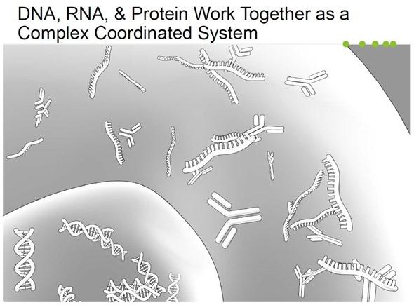 Trabalho do ADN, do RNA & da proteína junto como um sistema coordenado do complexo