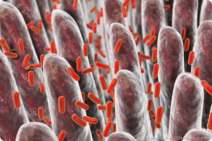villi intestine bacteria 3D