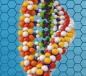 DNA-protein structure more diverse and flexible chain than previously thought, study reveals