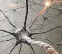 Study could help explain how synapses may be made weaker or stronger