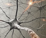 Boosting energy levels within damaged nerve fibers may promote axonal regeneration