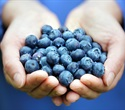 Antioxidant treatment may decrease cardiovascular risk in women with type 1 diabetes