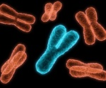 Protective barrier inside chromosomes helps prevent errors during cell division, study finds