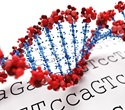 Scientists uncover genome variation linked to increased risk of developing Alzheimer's