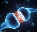 TSRI biologists identify brain hormone that selectively stimulates fat metabolism