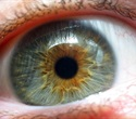 Aging immune cells increase risk for macular degeneration