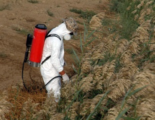 Study finds link between high pesticide exposure and poor sense of smell among farmers
