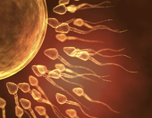 Researchers investigate genetic mutations in sperm cells to help prevent birth defects