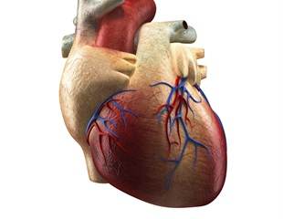 Low-risk atrial fibrillation patients fare better without antithrombotic therapy, study finds