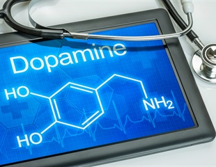 MRI sensor reveals how dopamine drives brain activity