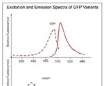 Characterization of Excitation and Emission Spectra of Commonly Used Variants of Green Fluorescent Proteins