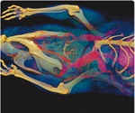 Visualizing infectious disease: advances in in vivo optical imaging