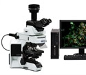 Real-time and fluorescence imaging with the Olympus DP74 color microscope camera