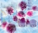 Chromatrap® ensures best quality chromatin in ChIP assays