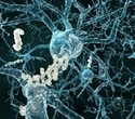 Researchers describe new class of potent inhibitors against amyloid plaques