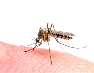 Scientists develop new tool for studying the biting behavior of mosquitoes