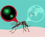 Prior dengue virus infection increases Zika virus-induced damage during pregnancy