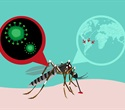 Study reveals high-resolution view of Zika viral life cycle within infected cells
