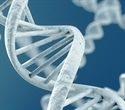 Mayo Clinic research advances understanding of DNA repair mechanisms