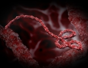 Researchers use supercomputers to simulate the inner working of Ebola virus