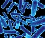 Study shows septin proteins detect and kill gut pathogen, Shigella