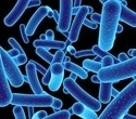 Precision editing of gut bacteria reduces inflammation in mouse model of colitis