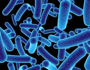 Bacteria use hopping motion to move among tight spots, Princeton study shows