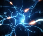 Scientists discover new way to generate human motor nerve cells