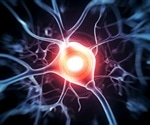 Findings could lead to treatments for chronic pain caused by nerve damage