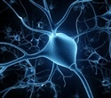 Study explores health and function of cortical neurons in hand amputees