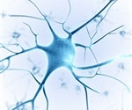 Researchers create noninvasive technology that detects when nerve cells fire