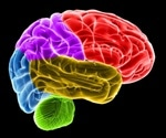 Brain areas linked to memory and emotion aid odor navigation in humans