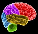 Research in people with IBS shows link between gut microbiota and brain regions