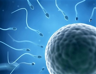 Chronic preconception exposure to genistein may adversely affect female fertility, mice study finds