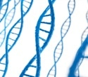 Impaired DNA replication may lead to trans-generational inheritance of epigenetic changes