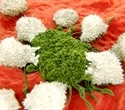 Anticancer drugs can help plants to battle infection