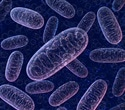 Study provides better knowledge about healthcare burden of mitochondrial diseases
