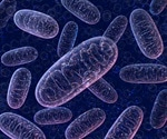 Sick mitochondria pollute the cells, cause telomere damage