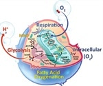 AMSBIO offers extensive products to study metabolic pathways in cells
