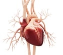 'Heart disease' related to hardening of arteries could affect feet, kidneys and the brain