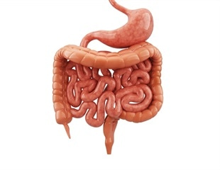 Research highlights potential targets to help fight Crohn's disease