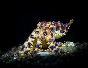 Octopus inspired camouflage