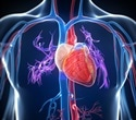 Penn research team identifies novel therapeutic target for heart disease