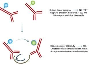 Development of Homogeneous HTRF Insulin Assay using PHERAstar FS Microplate Reader