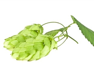 Metagenics awarded two new patents for hops-derived anti-inflammatory compositions