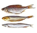 Researchers show how fish oil component helps in survival of injured retina, brain cells