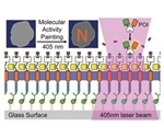 German scientists design molecular paintbrush technique to control and monitor key intracellular processes